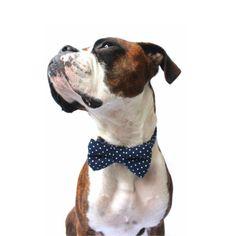 Dog Bow Tie, Navy Polka Dot Bow Tie, Polka Dot Dog Bow Tie