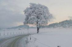 Der schneereiche Winterstart hat die Landschaft in weiß gehüllt!