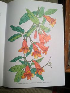 Melissa Hinckley 18 Division From American Wildflowers Coloring Book