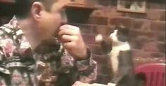 Kitty speaks sign language - Album on Imgur