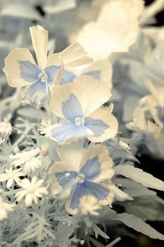 Blue and white porcelain pansies
