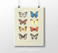 Eight Butterfly Species  Various Dimensions  ART PRINT