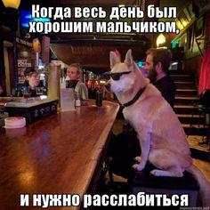 Когда весь день был хорошим мальчиком, и нужно расслабиться - Собака в очках за барной стойкой