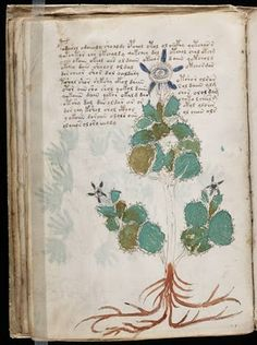 the voynich manuscript via a billion tastes and tunes #voynich #manuscript #undeciphered #codes #specimens #diagrams #books #bookart #paper