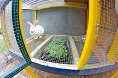 Salad bar below rabbit hutch. Brilliant   ...........click here to find out more     http://googydog.com