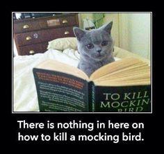 To Kill A Mockingbird Funny Funny Cats Funny Animals Cute Cats Adorable Animals