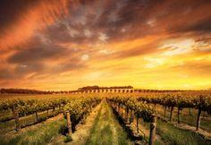 É terroir pra cá, terroir pra lá... Mas afinal, o que define um terroir? E o que ele tem a ver com bons vinhos?