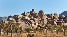 Joshua Tree National Park in California.  (AppEx: Ian White)