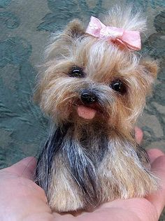 This precious little yorkie I needle felted .  I saw a real picture of a real yorkie, it was so cute I just had to make her.  I named her Lillie Pie.