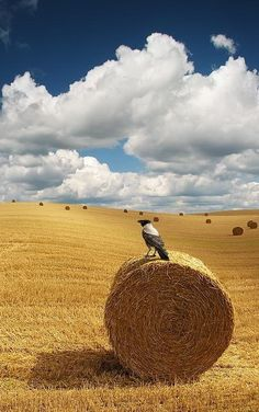New mown hay • photo: Silver SB on 500px