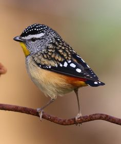 Insect Photography, Animal Photography, Most Beautiful Birds, Animals Beautiful, Reptiles, Australia Animals, Animal Magic, Australian Birds, Kinds Of Birds
