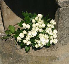 Biele ruže. #whiteroses #roses #beautifulflowers #flowers #idealgift #slovakia #kvetyexpres Plants, Plant, Planets