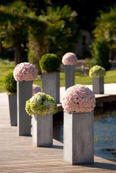 Boules de roses du jardin, boules de buis et d'hortensias par À Fleur et à…