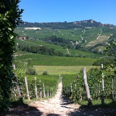 Day 1 Vineyards in Barolo, Piedmont This has become our favorite Italian red wine.