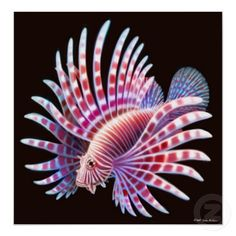Coral Reef Lionfish Poster print