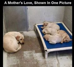 Mothers love makes the true valentine. #Engineering #Fact #Quote #electrical #electricalengineering #mechanical #mechanicalengineering #memes #civilengineering #funnymeme #funny #funfunfun #Engineer #lol #lolz #awesome #awesomeness #jokes #engineeringjokes #love #lovely #repost #instagram #valentines #valentineday #mom #mother #dog #puppy #cute #love