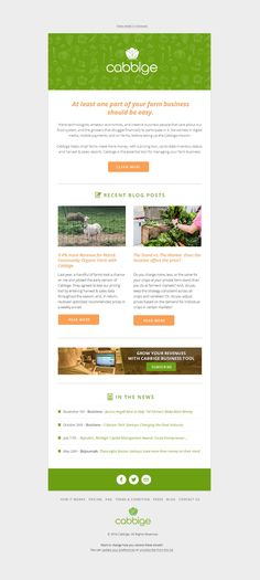 Newsletter Template Free Email Template In Green Color Email