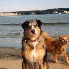 Digby and Tyler...never too far away