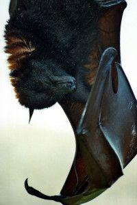 10 Reasons You Should Love Bats