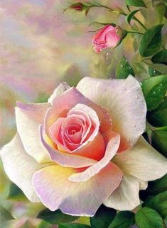 Beautiful Rose Flowers, Love Rose, Amazing Flowers, 2 Clipart, Rose Pictures, Rose Frame, Arte Floral, Watercolor Flowers, Flower Art