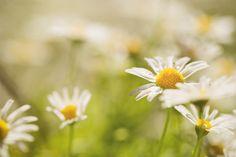 joyful spring photo