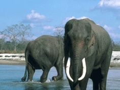 http://www.amaraelephantblog.com/2013/11/protecting-elephants-it-takes-more-than.html