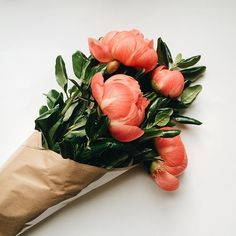 I love me some peonies. (at Give A Little Love | Noah & The Whale )
