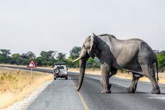 Photographs of various destinations and adventures across Botswana by Melanie van Zyl South Africa, Bliss, Elephant, Adventure, Places, Animals, Animales, Animaux, Elephants