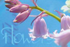 Orchidea+-+plakat