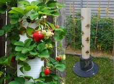 Strawberry-Tube-Planter-3