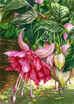 """""""Bella Rosa"""" Fuchsia. Watercolor 2.5x3.5"""" ACEO #298 © Jillian Crider"""