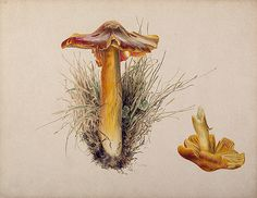 by Beatrix Potter from Public Domain Review, via Flickr