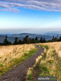 Best Roan Mountain hikes: hike the Appalachian Trail to Grassy Ridge Bald in the Roan Highlands