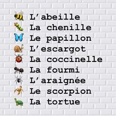 French Language Basics, French Language Lessons, French Language Learning, French Lessons, French Words Quotes, Basic French Words, How To Speak French, Learn French, French Flashcards