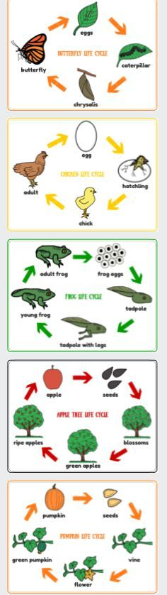 Life Cycle Posters, frog, chicken, butterfly, apple tree, pumpkin