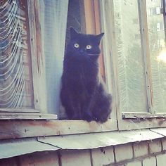 katten | Tumblr