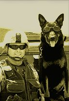 Honor our military canine vets! Military Working Dogs - www. Army Dogs, Police Dogs, Military Working Dogs, Military Dogs, Work With Animals, Guide Dog, Puppy Mills, German Shepherd Dogs, German Shepherds