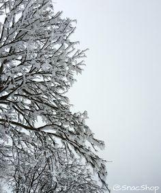 Beautiful's iced @snacshop #snow #riservabianca #iced #powder