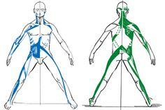 Clasificación de las cadenas musculares del cuerpo