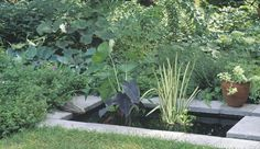A small, rectangular pond creates a dramatic transition from a formal, sunny garden to the relaxed informality of the shaded woodland beyond, in the author's former garden. The pond, lined with concrete steppers, is filled with elephant ears and sweet flag.
