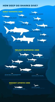 Celebrate Shark Week with this fun infographic on how deep sharks dive! Scuba Diving Quotes, Shark Diving, Whale Sharks, Cave Diving, Shark Facts, Marine Biology, Animal Facts, Ocean Creatures, Pisces