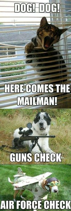 Funny Dogs Memes 29 Funny Cat Memes - People spending most of the time at home love to have pets. Cats are considered as best indoor pets. Cat people pursue love and friendl… Cute Animal Memes, Funny Animal Quotes, Animal Jokes, Cute Funny Animals, Funny Animal Pictures, Cute Baby Animals, Cute Cats, Cat Quotes, Dog Pictures