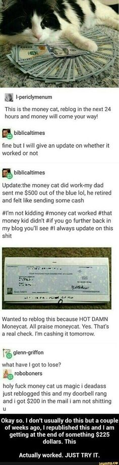 money, cat, and funny image