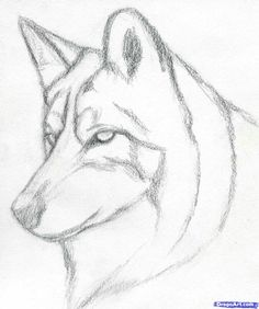 Easy Pencil Drawings Step By Step Wolf Learn How To Draw A Wolf Head, Mexican Wolf, Forest Animals Animal Sketches, Drawing Sketches, Sketching, Drawing Ideas, Pencil Drawing Inspiration, Pencil Drawing Tutorials, Drawing Drawing, Pattern Drawing, Online Drawing