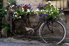 An old vintage retro bicycle that has been turned into a lovely bright floral art arrangement with French flowers in different colours. A rustic country cottage photo for your European style home decor.  TITLE: Vintage Bike with Flowers MEDIUM: Fine art print (unframed) PRINT SIZES: SIZES: Please choose from drop-down menu. •Choices are 5x7, 8x10, 11x14, 12x16, 16x20, 20x24 •If you are looking for a size not listed please message me.   PRINT DETAILS: This listing is for an unmatted and…