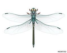 Vektor: libelle blau