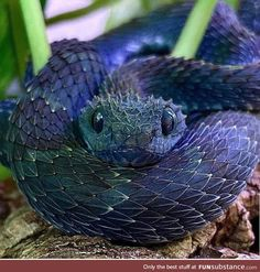 Da cutest danger noodle via /r/aww Pretty Animals, Cute Little Animals, Cute Funny Animals, Animals Beautiful, Pretty Snakes, Cool Snakes, Beautiful Snakes, Scary Snakes, Cute Reptiles