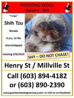 "Granite State Dog Recovery Page Liked · May 7 ·     Missing in Salem NH – ""Fudge"" is a female Shih Tzu, 6 years, 12 pounds, microchipped. She is shy – Do Not Chase! Missing since 5/6/2015 from Henry Street and Millville Street. Please share and use extra caution in this area. CALL (603) 894-4182 or (603) 327-8193 with sightings. Or call Salem Animal Control Officer at (603) 890-2390  ~~ Owner does not use computer, be sure to CALL with any information ~~"