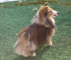 NEEDLE FELTED DOG-in Memory of Maggie-Custom Sculptures by GOURMET FELTED by Gourmet Felted, via Flickr