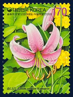 Protection of Endangered Species Special,  Lilium cernuum Kom, Plants, LightPink, Green, Yellow, 2000 02 25, 멸종위기 및 보호야생 동,식물 특별, 2000년 2월 25일, 2050, 솔나리, postage 우표